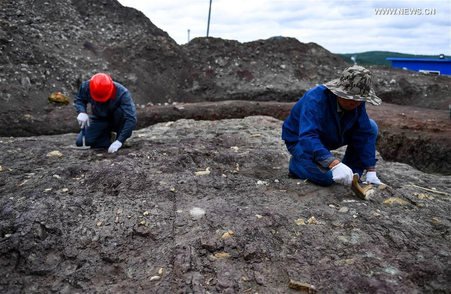 Systematic excavation of dinosaur fossils launched in NE