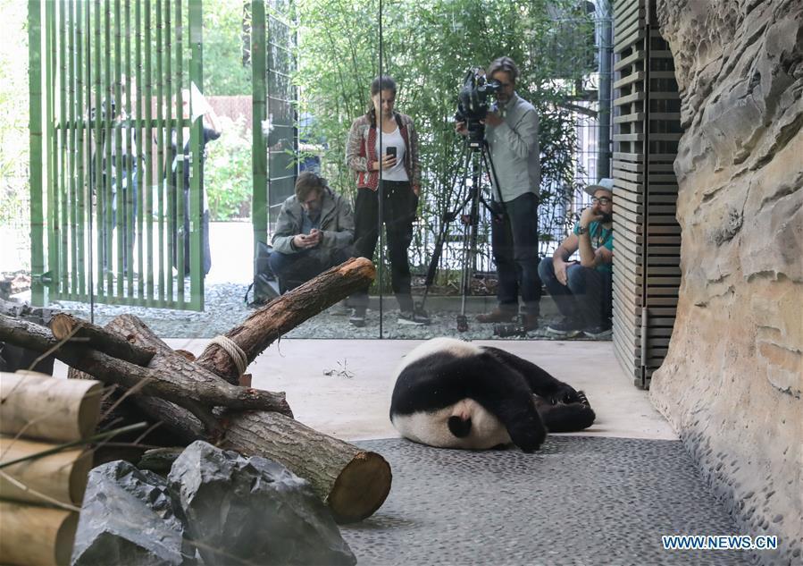 zoo berlin pandabären