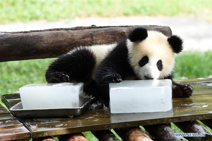 Zoos Take Measures To Cool Down Animals In Hot Weather 1 14