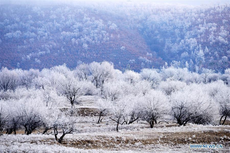 Rime scenery in northeast China's Heilongjiang(1/5)