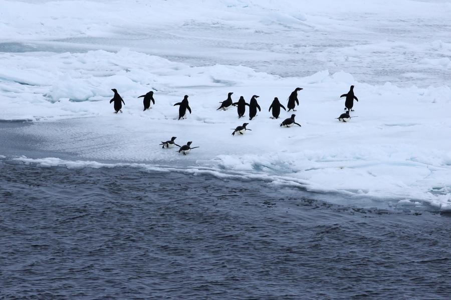 Penguins come into sight as the Snow Dragon, China's polar icebreaker, arrives in the Antarctic, Dec 5, 2017. The icebreaking vessel is on its 34th scientific expedition to the Antarctic. (Photo/Xinhua)