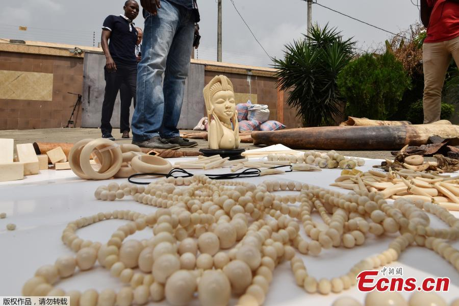 ee869df48c1 Seized elephant ivory are displayed at the headquarters of the country's  Transnational Organised Crime Unit (UCT) in Abidjan on January 25, 2018.