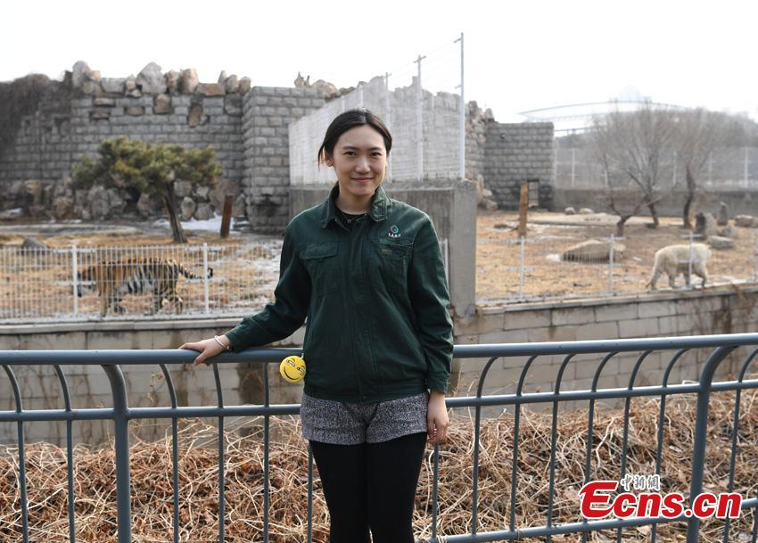 Li Yimeng works at the Changchun Zoo and Botanical Garden in Changchun City, the capital of Northeast China\'s Jilin Province. The 27-year-old postgraduate student in veterinary science at Jilin University is responsible for looking after seven tigers and one lion, task that including preparing food and cleaning their dens. (Photo: China News Service/Zhang Yao)