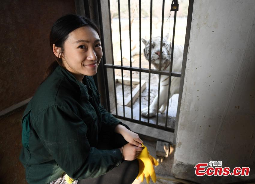 Li Yimeng checks the food plan for tigers at the Changchun Zoo and Botanical Garden in Changchun City, the capital of Northeast China\'s Jilin Province. The 27-year-old postgraduate student in veterinary science at Jilin University is responsible for looking after seven tigers and one lion, task that including preparing food and cleaning their dens. (Photo: China News Service/Zhang Yao)