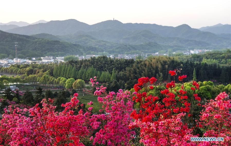 Photo taken on April 10, 2018 shows tea plantations among azalea blossoms in Shucha Township, Shucheng County of East China\'s Anhui Province.  (Photo/Xinhua)