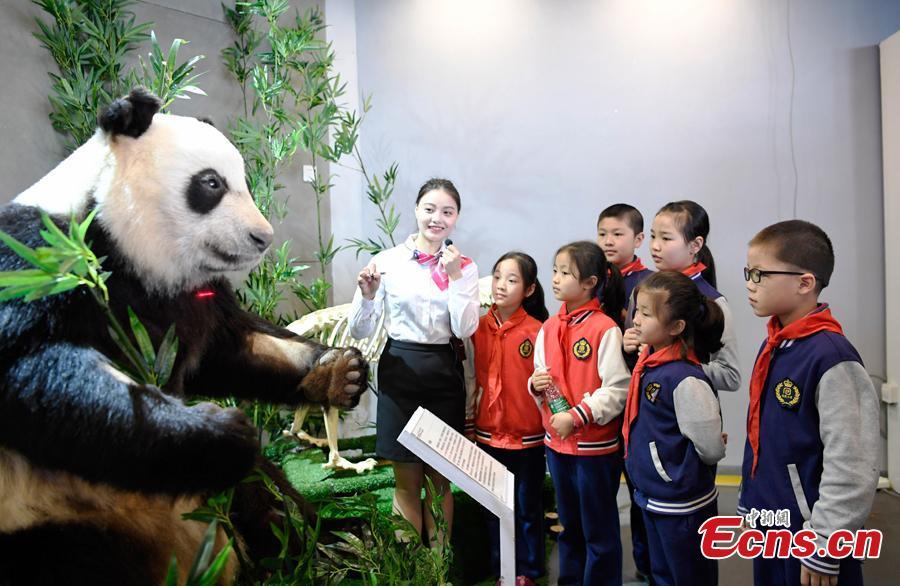 四川省成都市生命奥秘博物馆揭幕一个塑化大熊猫标本