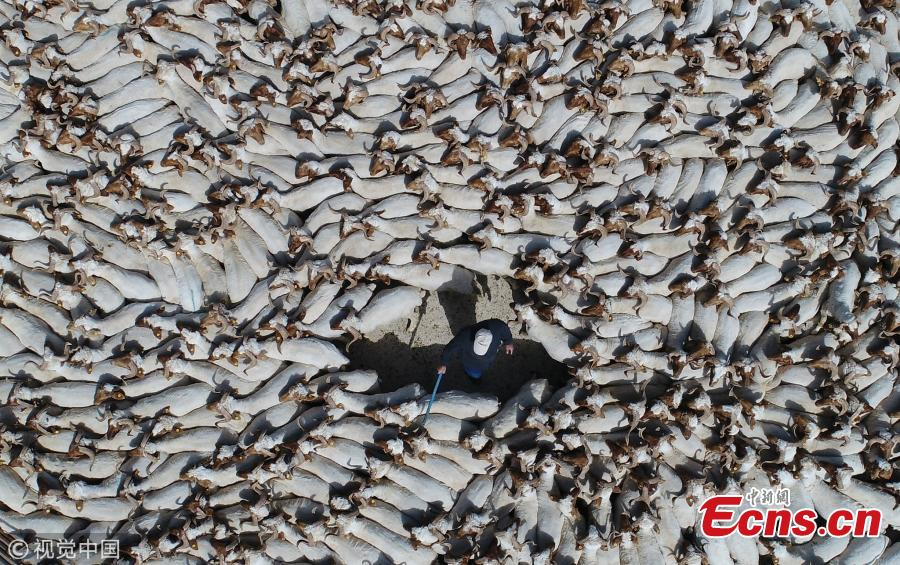 herd of sheep after shearing gather in turkey 1 4