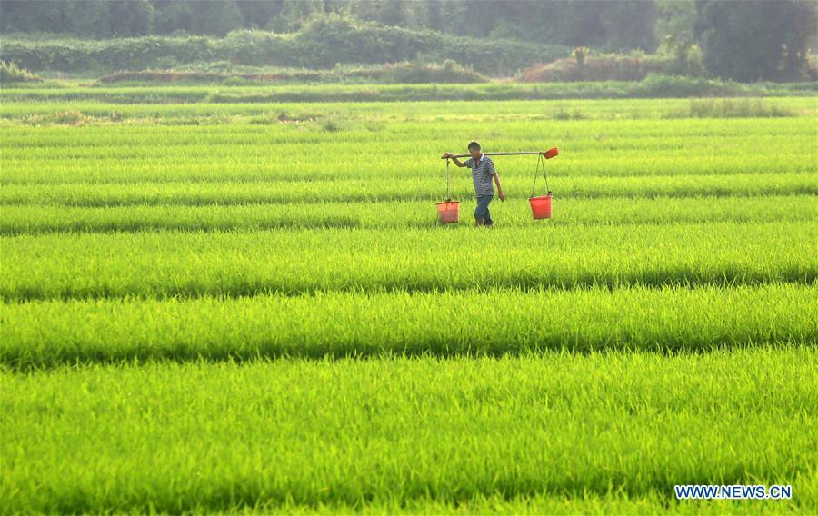 A farmer works in the field in Yongfeng County, east China\'s Jiangxi Province, May 21, 2018. (Xinhua/Liu Haojun)