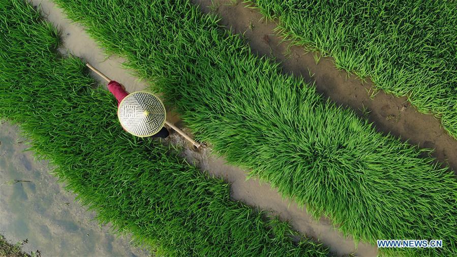 A farmer works in the field in Guojiawan Village of Yuping Dong Autonomous County, southwest China\'s Guizhou Province, May 21, 2018. (Xinhua/Hu Panxue)
