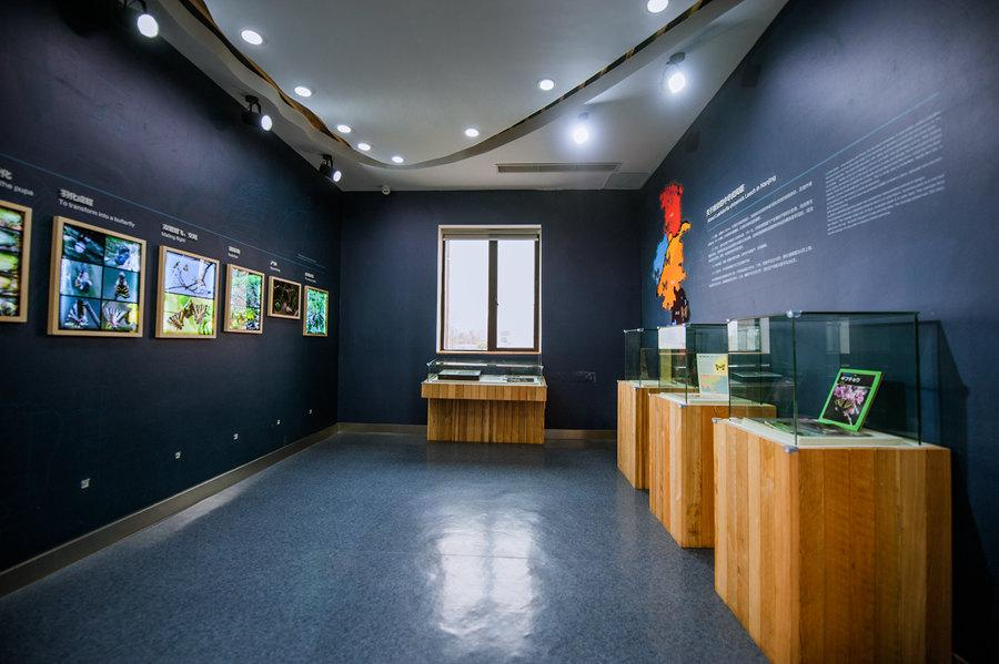 The museum features images, specimens and documents narrating different life stages of the Chinese Luehdorfia. (Photo provided to chinadaily.com.cn)