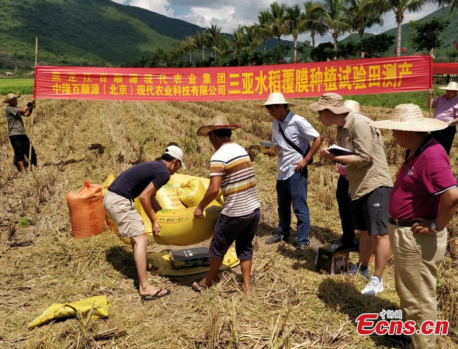 Photo taken on May 22, 2018 shows experts examining and verifying a new hybrid rice variety (Chaoyou 1000), developed by Yuan Longping's team, which has set a new yield record of 1,065.3 kg per mu (about 0.07 hectares) of farmland in a test field in Sanya City, South China's Hainan Province. The field was jointly managed by the National Hybrid Rice Research and Development Center and several companies. Yuan Longping, known as the \