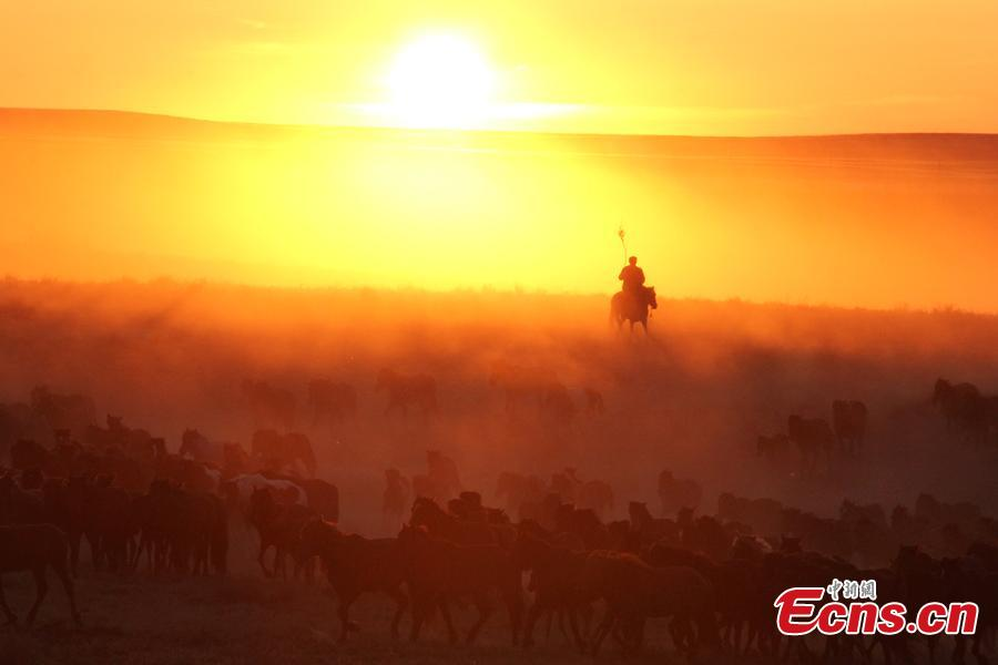 A man rides with a herd of horses at sunset at a grassland in Jeminay County, Northwest China's Xinjiang Uyghur Autonomous Region. Locals mainly herd livestock for a living. As temperatures rise, herdsmen are starting to move their livestock to summer pastures. (Photo: China News Service/Meng Ruili)