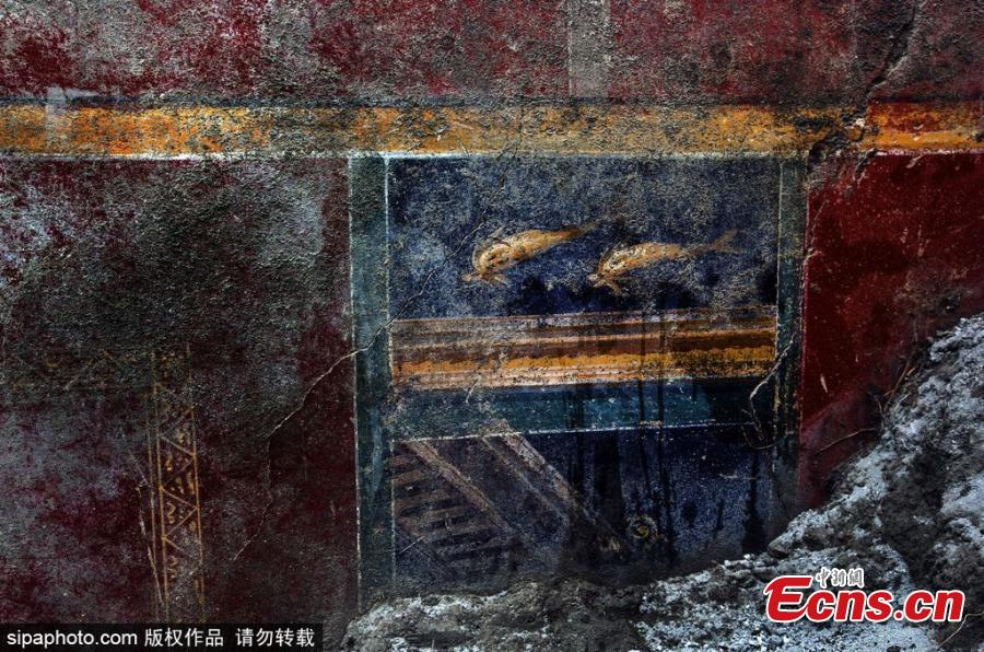 Wall paintings of dolphins found at the Pompeii ruins in Italy. (Photo/SipaPhoto)
