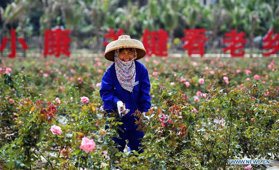 Li Yumei trims roses at a garden in the Yalong Bay of Sanya, a coastal tourist resort in south China\'s Hainan Province, March 6, 2018. This year marks the 40th anniversary of China\'s starting to implement reform and opening up policy. (Xinhua/Guo Cheng)