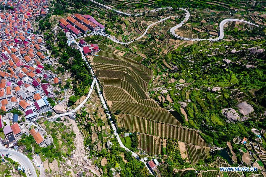 Aerial photo taken on May 19, 2018 shows a tea garden and a village at the foot of the Laoshan Mountain in Qingdao, east China\'s Shandong Province. (Xinhua/Guo Xulei)