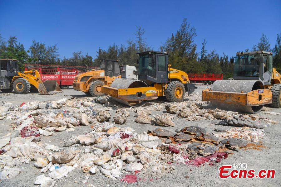Aquatic wildlife and their products, seized in efforts to curb illegal trading in four provinces, are destroyed collectively in Sanya City, South China's Hainan Province, May 23, 2018. Authorities destroyed more than 6,000 aquatic wildlife products that weighed about 40 tons and were valued at nearly 100 million yuan ($15 million). (Photo: China News Service/Luo Yunfei)