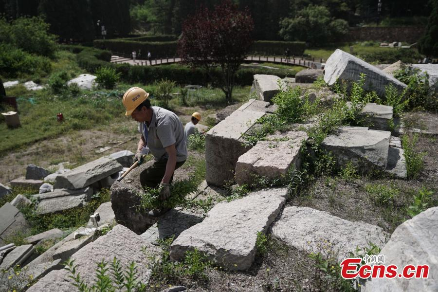 Photo taken on May 23, 2018 shows workers pulling up weeds as authorities of the Old Summer Palace (Yuanmingyuan) start a preservation project on the Yuanyingguan and Dashuifa ruins. The work will continue for 120 days to protect these two sites from collapse. Constructed throughout the 18th and early 19th centuries, the Old Summer Palace was a complex of royal palaces and gardens. The complex suffered extensive looting and destruction at the hands of French and British troops during the Second Opium War in 1860. (Photo: China News Service/Cui Nan)