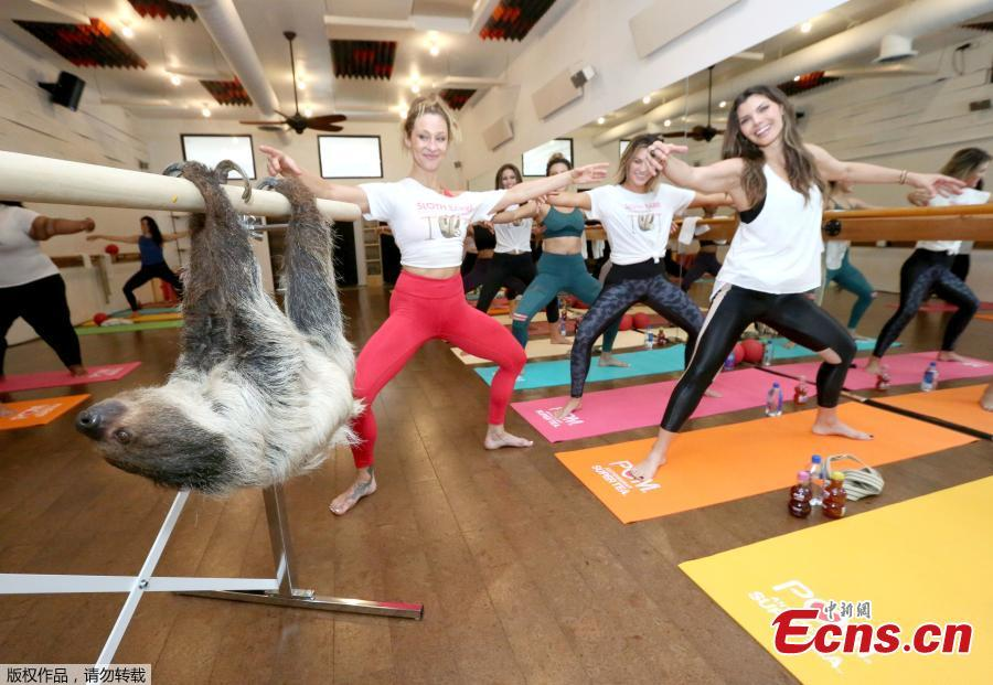 Actress Ali Landry (right) kicks off Memorial Day weekend hanging out with Lola the Sloth at POM Wonderful Antioxidant Super Tea\'s first-ever Sloth Barre class at Barre Belle on Thursday, May 24, 2018 in Los Angeles. (Photo/Agencies)