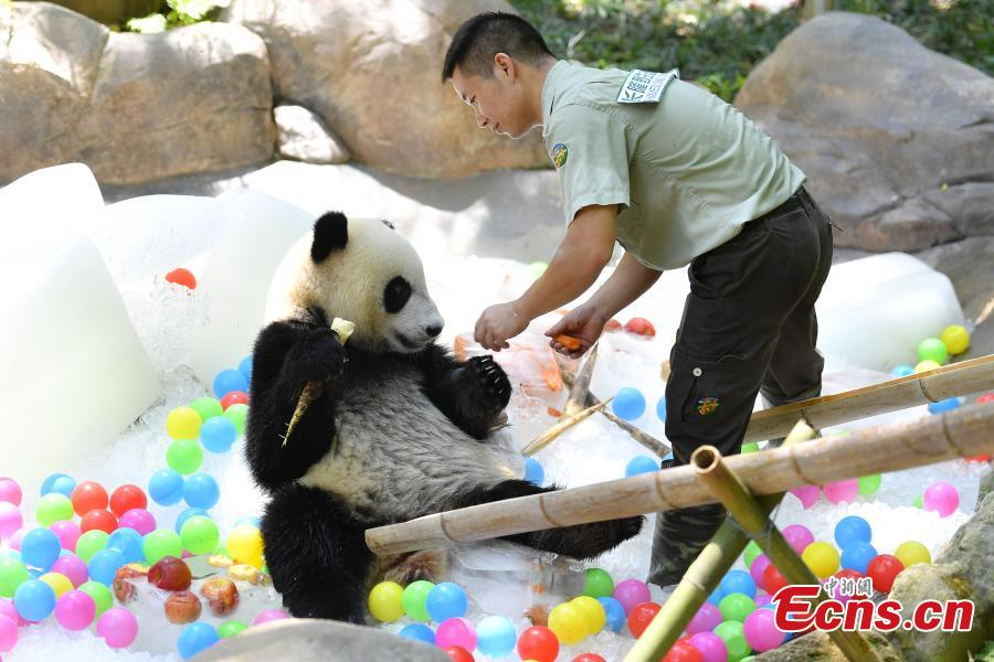 A giant panda enjoys iced fruit at Chimelong Safari Park in Guangzhou City, South China's Guangdong Province, May 28, 2018. As temperatures rose to 35 degrees centigrade in Guangzhou, keepers in the park started providing frozen food to the pandas. (Photo: China News Service/Chen Jimin)