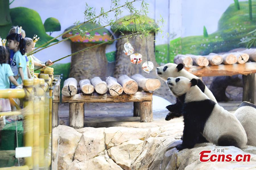 Giant pandas enjoy iced fruit at Chimelong Safari Park in Guangzhou City, South China's Guangdong Province, May 28, 2018. As temperatures rose to 35 degrees centigrade in Guangzhou, keepers in the park started providing frozen food to the pandas. (Photo: China News Service/Chen Jimin)