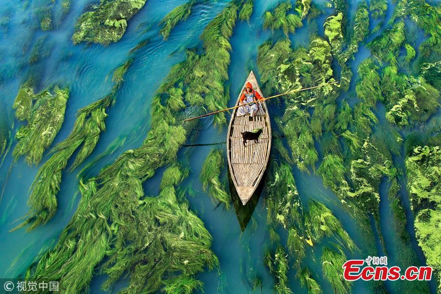 A boat skims over lush green reeds and algae in tranquil Karatoya River in Bogra, Bangladesh, making a stunning \