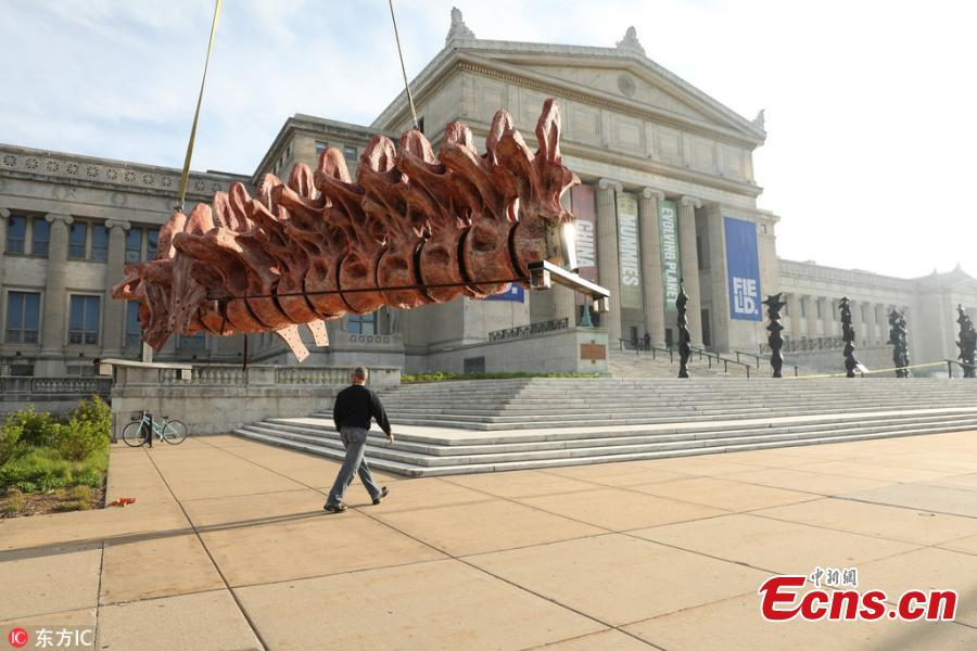 Over the course of four days, scientists assembled a cast of the biggest dinosaur discovered to date. The cast assembled at Chicago\'s Field Museum, named Maximo, is 37 meter across and stands six meter tall at the head. Maximo is a member of the species Patagotitan mayorum, a long-necked, plant-eating dinosaur that lived over 100 million years ago in what is now Patagonia, Argentina. The cast takes up a third of the museum\'s main hall. Maximo is modeled from the fossil bones of seven individual dinosaurs of the same species that were excavated from a quarry.(Photo/IC)
