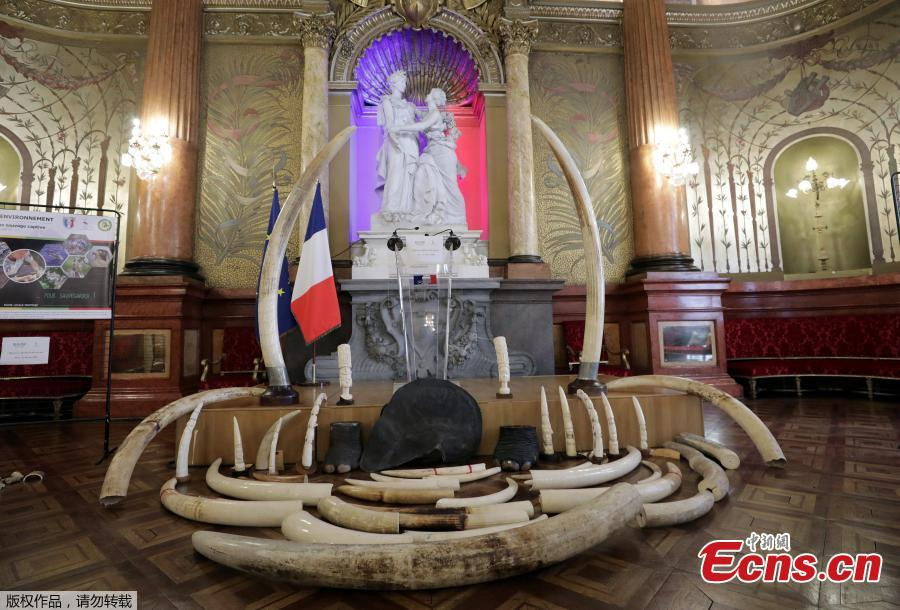 Seized ivory articles and elephant tusks are presented before their distruction in Nice, France, May 30, 2018. (Photo/Agencies)