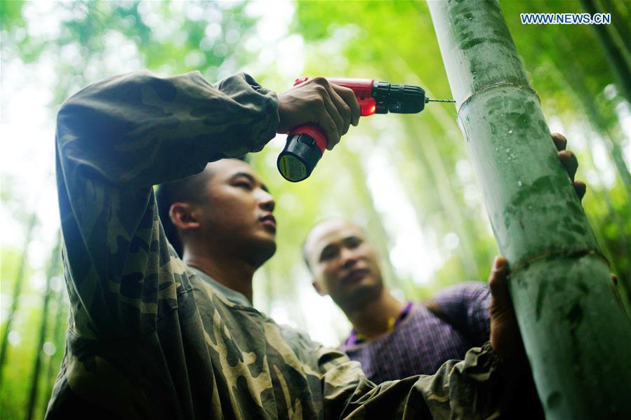 Villagers drills a hole on a bamboo so as to inject wine into it for secondary fermentation at Daliu Village, Longji Town, Longsheng County, south China\'s Guangxi Zhuang Autonomous Region, May 30, 2018. Best known for its rich bamboo materials, Longji has developed bamboo wine industry in recent years. The bamboo wine, usually taking three or four months for brewing in growing bamboos, is popular here. (Xinhua/Huang Yongdan)