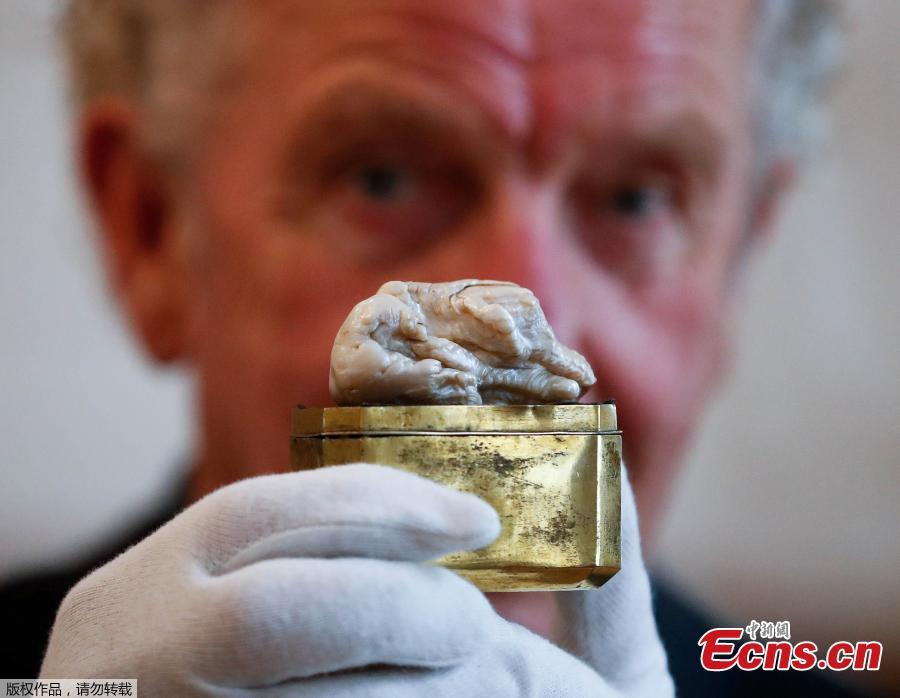 Herman Dommisse, the owner of The Sleeping Lion Pearl, which once belonged to Catherine the Great and believed to be the world\'s largest freshwater pearl, shows the pearl before being auctioned in the Hague, Netherlands May 28, 2018. (Photo/Agencies)