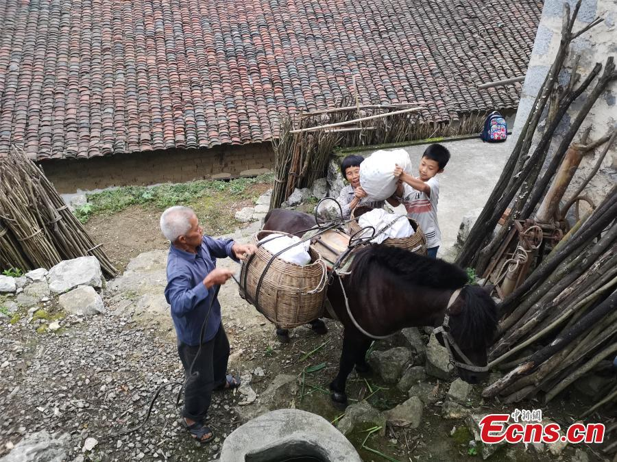 Li Jianwen, 10, helps his great-grandmother load vegetables on a horse in Liucheng County, South China's Guangxi Zhuang Autonomous Region, May 31, 2018. The teenager is a good helping hand for all kinds of housework at home. (Photo: China News Service/Zhu Liurong)
