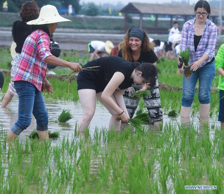People participate in a rice transplanting game in Hongqi Village of Hangzhou, east China\'s Zhejiang Province, June 2, 2018. The game was organized to evoke people\'s memory of traditional farming customs and promote local tourism. (Xinhua/Xu Yu)