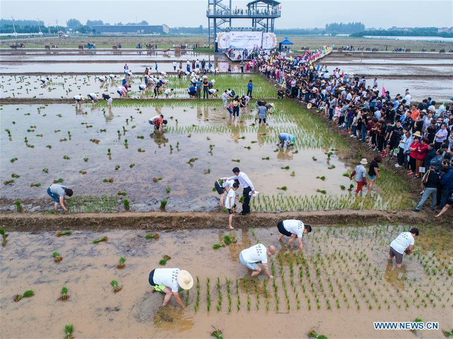 Aerial photo shows people participating in a rice transplanting game in Hongqi Village of Hangzhou, east China\'s Zhejiang Province, June 2, 2018. The game was organized to evoke people\'s memory of traditional farming customs and promote local tourism. (Xinhua/Xu Yu)