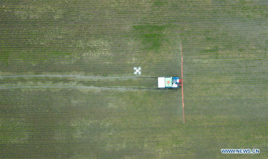 In this aerial photo taken on June 2, 2018, an unmanned sprayer works in a field during the demonstration of an agricultural pilot program featuring unmanned production process in Xinghua, east China\'s Jiangsu Province. (Xinhua/Li Xiang)