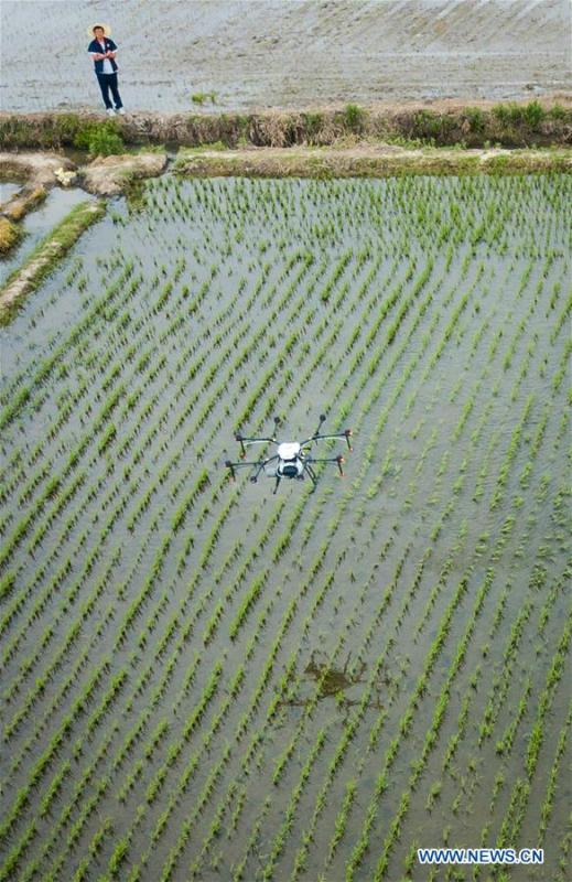 In this aerial photo taken on June 2, 2018, a drone works over a field during the demonstration of an agricultural pilot program featuring unmanned production process in Xinghua, east China\'s Jiangsu Province. (Xinhua/Li Xiang)