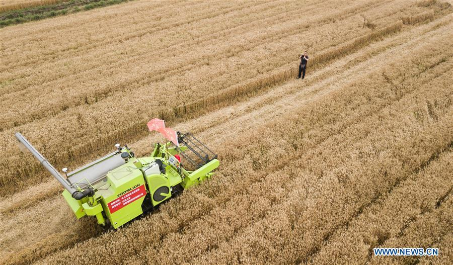 In this aerial photo taken on June 2, 2018, an unmanned combine harvester works in a field during the demonstration of an agricultural pilot program featuring unmanned production process in Xinghua, east China\'s Jiangsu Province. (Xinhua/Li Xiang)