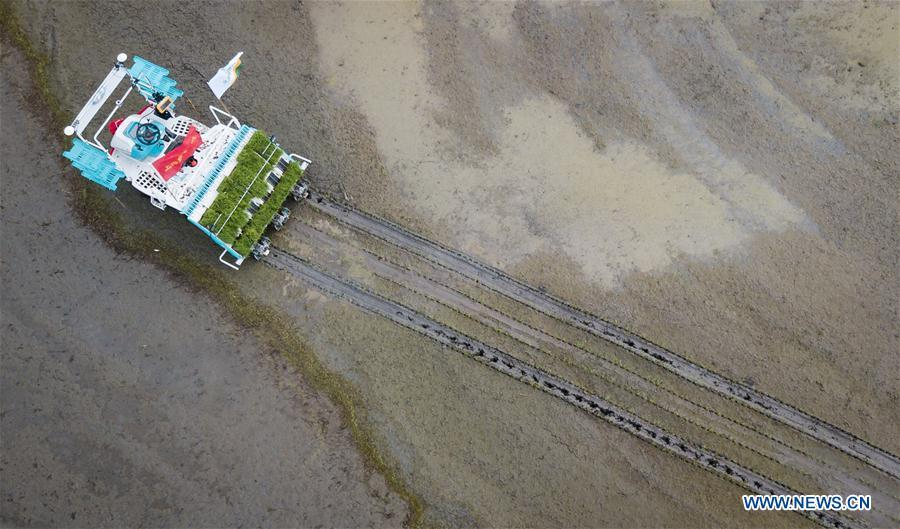 In this aerial photo taken on June 2, 2018, an unmanned rice transplanter works in a field during the demonstration of an agricultural pilot program featuring unmanned production process in Xinghua, east China\'s Jiangsu Province. (Xinhua/Li Xiang)