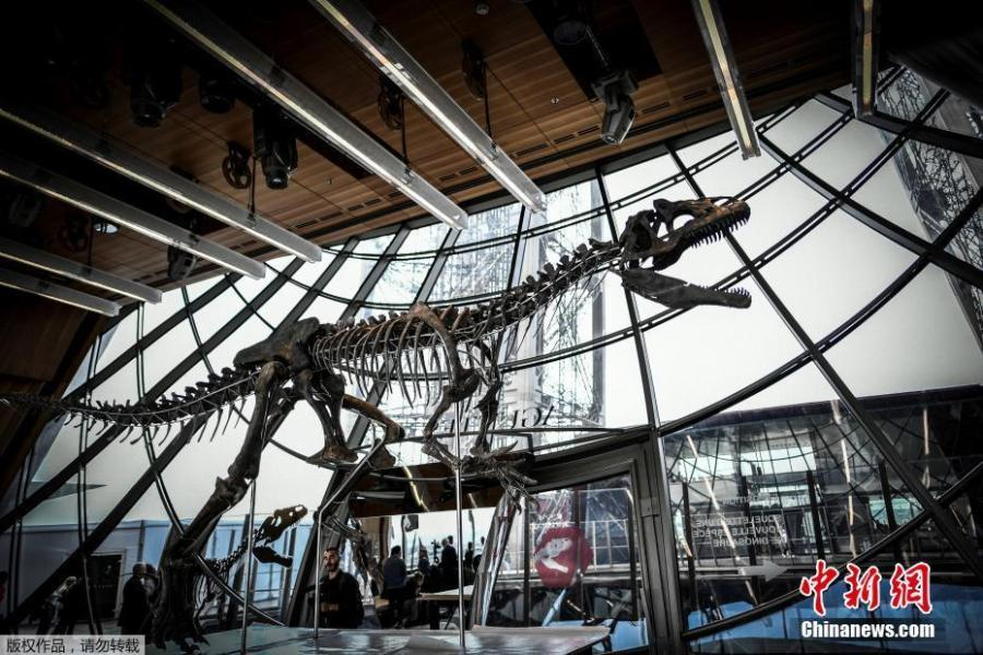 A dinosaur fossil is on display on the first floor of the Eiffel Tower in Paris, France, June 2, 2018. Discovered in Wyoming in 2013, the mysterious dinosaur skeleton fetched more than $2 million at an auction on June 4. The extremely rare dinosaur skeleton, thought to be a new species belonging to the theropod family, dates back to the late Jurassic period and is 150 million years old. (Photo/Agencies)
