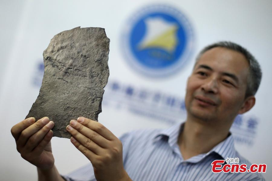 Chen Zhe, a researcher with the Nanjing Institute of Geology and Paleontology at the Chinese Academy of Sciences, shows the earliest known footprints left by an animal on earth, which date back at least 541 million years, in Nanjing, Jiangsu Province, June 7, 2018. Researchers from the institute and Virginia Tech University in the United States found the tracks in the Three Gorges area and published their report in the US journal Science Advances. (Photo: China News Service/Yang Bo)