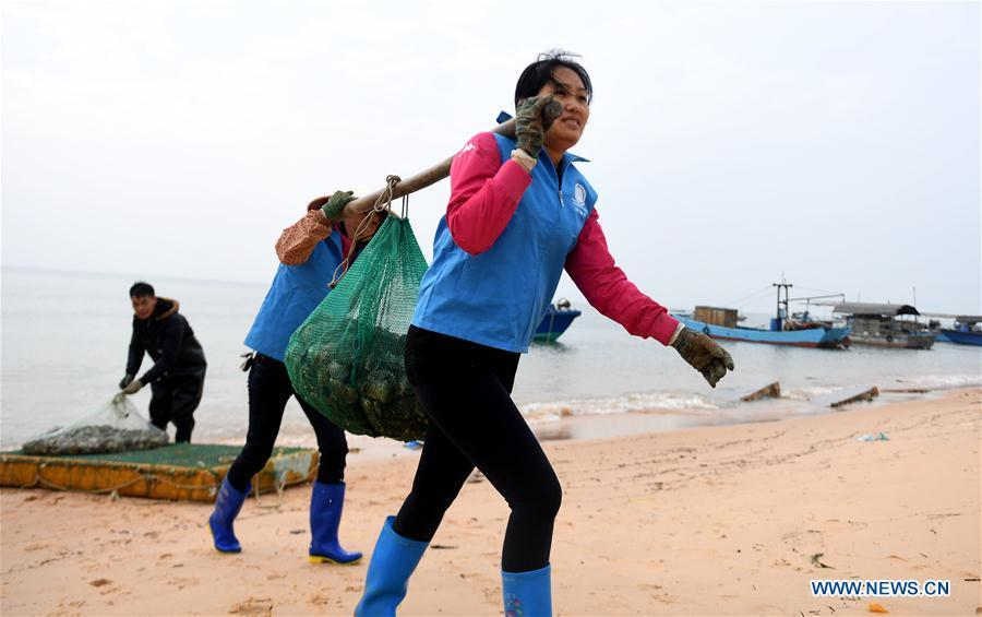 Pearl cultivators transfer shells at a pearl cultivation farm in Beihai City, south China\'s Guangxi Zhuang Autonomous Region, Dec. 7, 2017. World Oceans Day, a UN-designated day held annually on June 8, aims to arouse people\'s consciousness to preserve oceans on Earth. (Xinhua/Zhang Ailin)