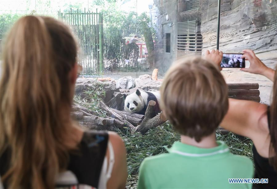Guests visit giant panda Jiaoqing at Berlin Zoo in Berlin, Germany, June 9, 2018. Mengmeng and Jiaoqing, the two pandas from China, arrived in Berlin on June 24, 2017. They became superstar during their first-year\'s stay here in Berlin Zoo. (Xinhua/Shan Yuqi)