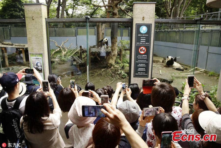 Visitors take photos of Xiang Xiang, the female giant panda born in Japan last year, at Ueno Zoo in Tokyo, June 12, 2018. The zoo set up a hammock as its birthday present as the panda turned 1 year old on Tuesday. (Photo/IC)