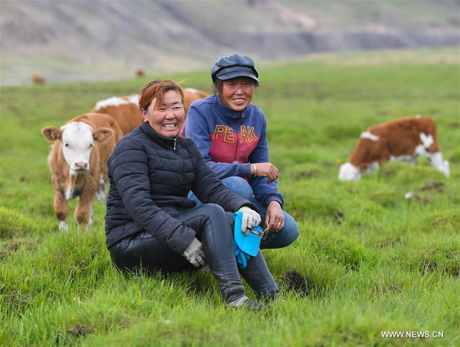 Aodunhu and Mudan pose for photo at the summer pasture after they arriving at the Ar Horqin Banner in Chifeng City, north China\'s Inner Mongolia Autonomous Region, June 5, 2018. June 5 was the day for Erden\'s family to move their cattle to a summer pasture, about 40 kilometers away from their family. It is a tradition for nomadic herdsmen spending their lives following the water and pasture. The transfer provides cattle and sheep abundant food and enables the grassland to renew itself. Erden and his sister drive their trucks loaded with living households and lead over 80 cattle towards the summer pasture. After 12 hours\' arduous journey, they arrived at their destination and prepared to set up yurt. They will stay here for a whole summer and return to their family in September. (Xinhua/Peng Yuan)
