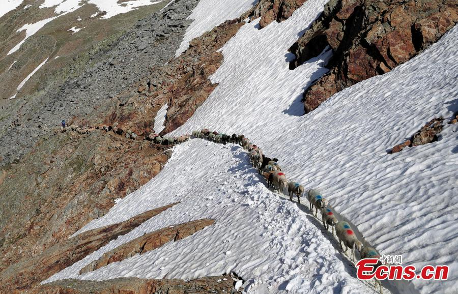 Sheep cross the alpine pass \