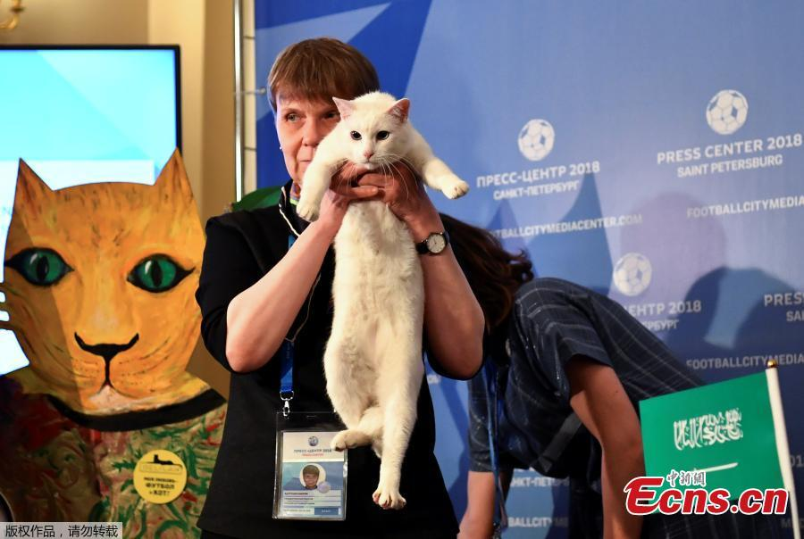 A participant holds Achilles the cat, one of the State Hermitage Museum mice hunters, which attempts to predict the result of the opening match of the 2018 FIFA World Cup between Russia and Saudi Arabia during an event in Saint Petersburg, Russia June 13, 2018. (Photo/Agencies)
