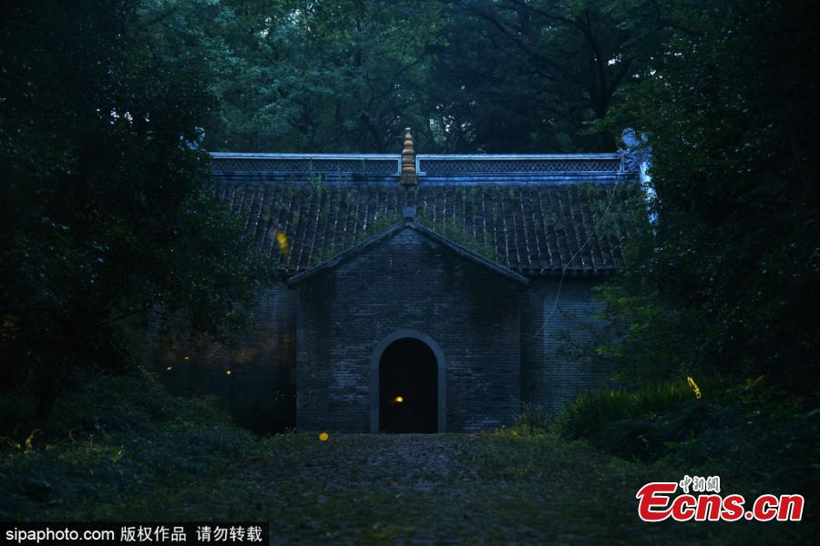 Fireflies glow around the Linggu Temple in Nanjing City, capital of East China's Jiangsu Province. (Photo/Sipaphoto)