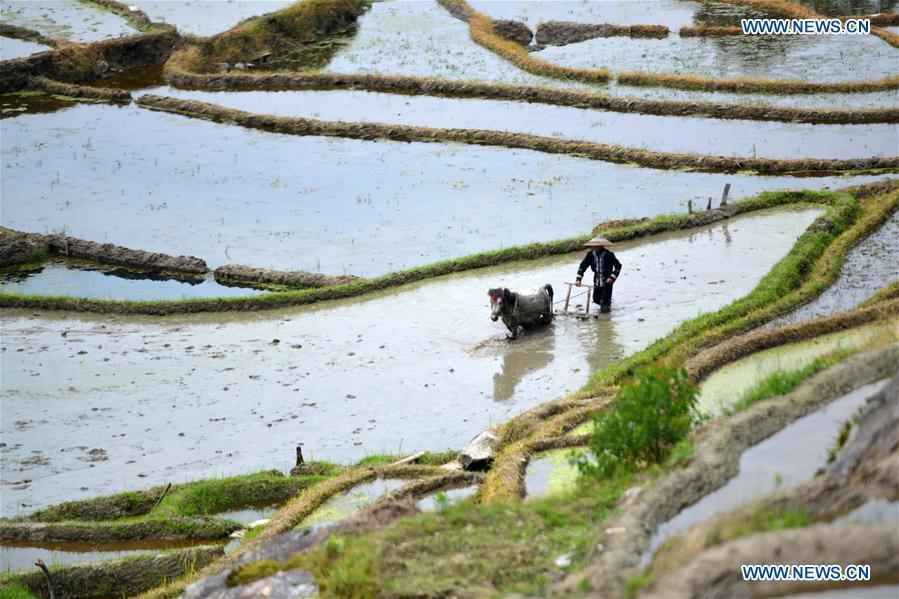 A farmer works in a terraced field in Sishui Village of Longsheng County, south China\'s Guangxi Zhuang Autonomous Region, June 16, 2018. (Xinhua/Pan Zhixiang)