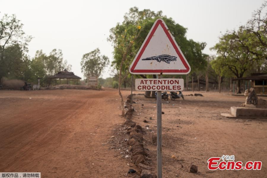 A road sign warning of crocodiles is pictured on May 19, 2018 in Bazoule, a village which happily shares its local pond with \'sacred\' crocodiles. Crocodiles may be one of the deadliest hunters in the animal kingdom, but in a small village in Burkina Faso it is not unusual to see someone sitting atop one of the fearsome reptiles. According to local legend, the startling relationship with the predators dates back to at least the 15th century. The village was in the grip of an agonizing drought until the crocodiles led women to a hidden pond where the population could slake their thirst. (Photo/Agencies)