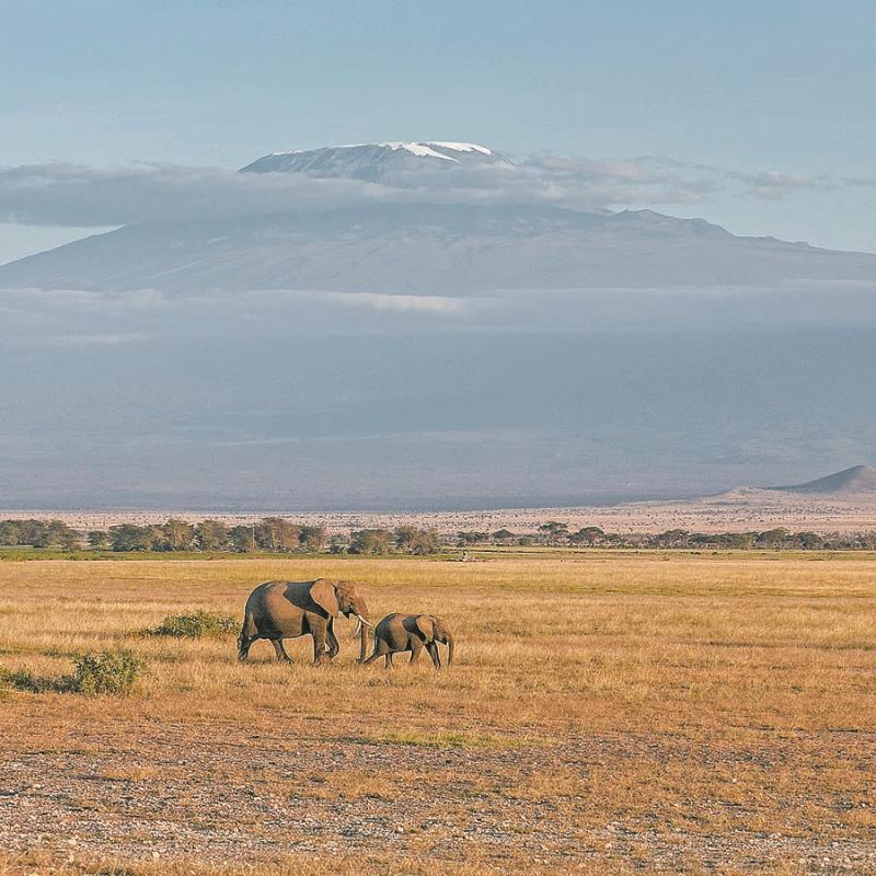 An adult female elephant and her baby in the Amboseli National Park near the foothills of Mount Kilimanjaro. (PHOTO BY XIE SONGXIN/CHINA DAILY)