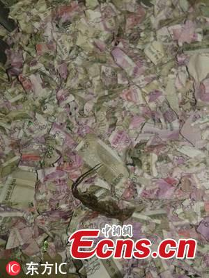 """Rats have reportedly destroyed Rs 1.2 million Indian rupees at an ATM machine in district Tinsukia of Assam state, police said. The pictures of the shredded notes inside the ATM have gone viral on social media. Many have called it a """"surgical strike by mice"""". According to reports, the carcass of a rat was found among the shredded notes. (Photo/IC)"""