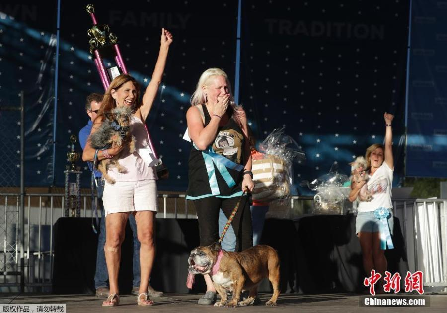 Megan Brainard, center, reacts after her dog Zsa Zsa, an English Bulldog, bottom, is announced the winner of the World\'s Ugliest Dog Contest at the Sonoma-Marin Fair in Petaluma, Calif., June 23, 2018. Also pictured at left is Yvonne Morones, holding her dog Scamp, who placed second, and Linda Elmquist, holding her dog Josie, who finished third. (Photo/Agencies)